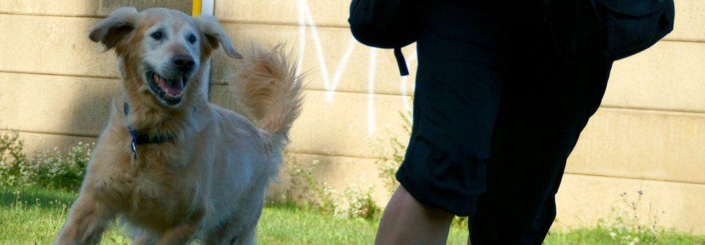 Hundebeschäftigung - DogDance -