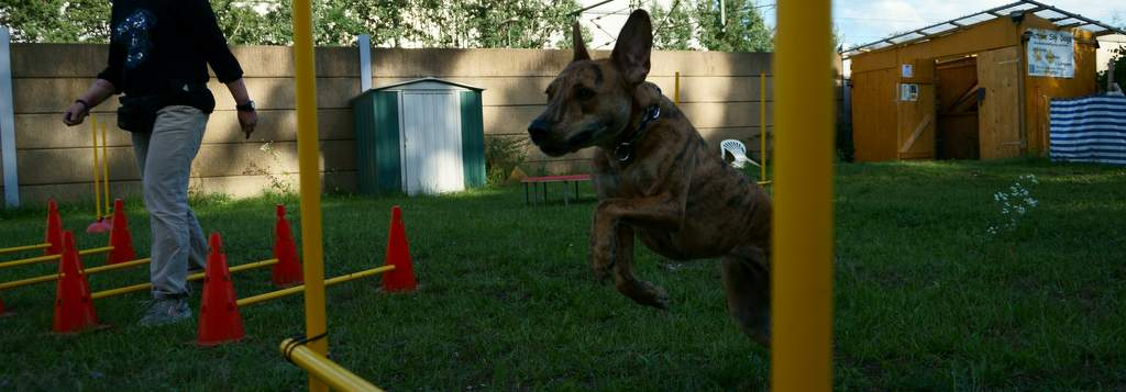 Hundebeschäftigung - JAD-Dogs -
